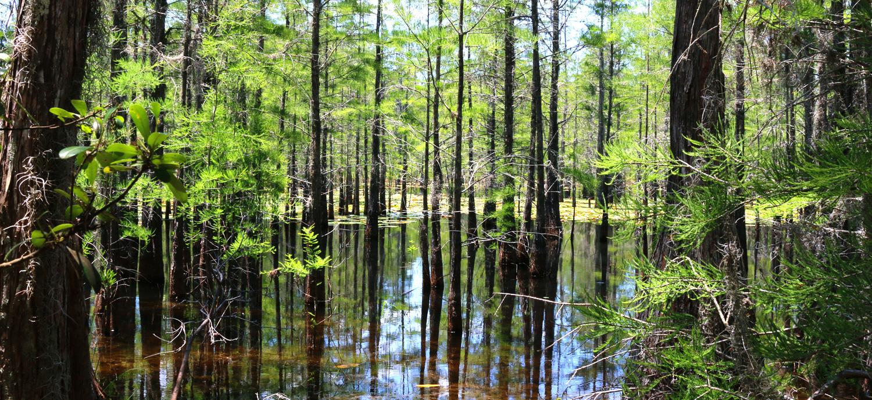 Healthy wetland