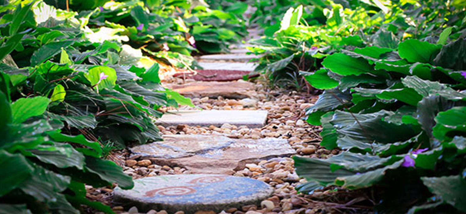 Stepping stones in Florida-Friendly Landscape