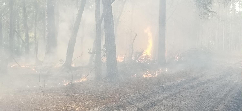 Controlled Burn at Cypress Creek preserve