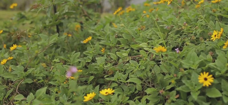 Closeup of Florida-Friendly Plants