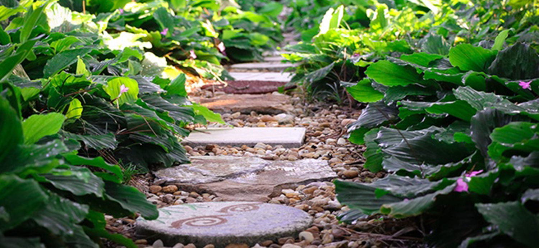 Stepping stones in Florida-Friendly yard